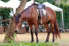 马在动物园里 免版税库存图片