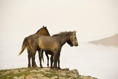 马在国家 免版税库存照片