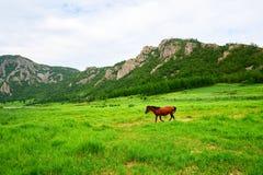 马在夏天牧场地 免版税库存图片