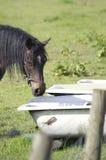 马在夏天草甸 免版税库存图片