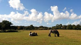 马在夏天 图库摄影