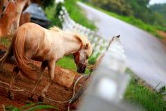 马在奶牛场 库存照片