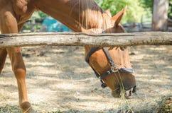 马在小牧场 库存照片