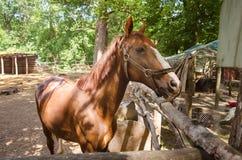 马在小牧场 图库摄影