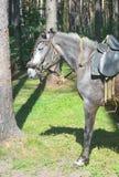 马在森林里 免版税库存图片
