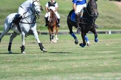 马在比赛的马球 免版税库存照片