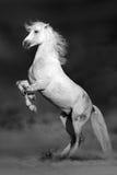 马在沙漠 免版税库存照片
