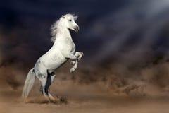 马在沙漠 图库摄影