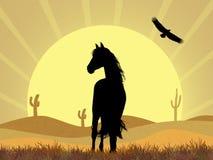 马在沙漠 库存例证
