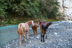 马在河Jampal i附近吃草 免版税库存照片