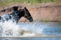 马在浇灌地方 免版税库存图片