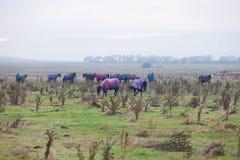 马在牧场地 免版税库存照片