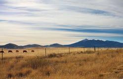 马在牧场地 免版税库存图片