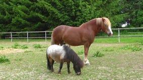 马在畜栏农场 影视素材