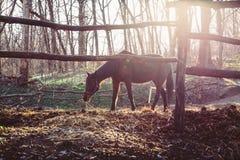 马在畜栏走 免版税库存图片