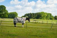 马在畜栏 免版税库存照片