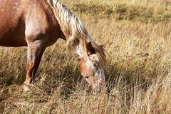马在秋天 免版税库存照片