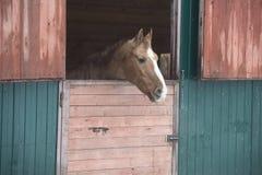 马在窗口里 图库摄影