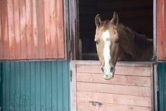 马在窗口里 免版税图库摄影