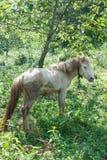 马在结构树下 图库摄影