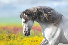 马在花草甸 库存图片