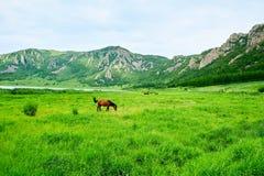 马在草原 免版税图库摄影