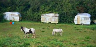 马在草甸吃草 库存图片