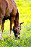 马在草甸 库存图片