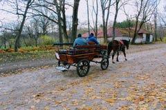 马在计数列夫・托尔斯泰庄园的公园走在Yasnaya Polyana在2017年10月 免版税库存图片