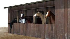 马在谷仓-白色背景的 免版税库存图片