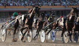 马在马略卡竞技场细节的上马具的赛马比赛 图库摄影