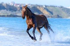 马在水中 库存图片