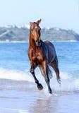 马在水中 免版税库存图片