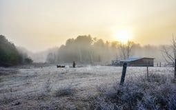 马在他们的畜栏在一个冷淡的11月早晨 库存照片