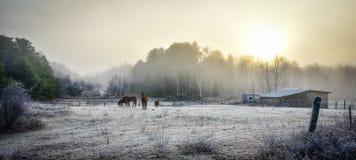 马在他们的畜栏在一个冷淡的11月早晨 图库摄影