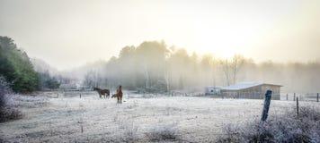 马在他们的畜栏在一个冷淡的11月早晨 免版税库存图片