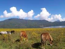 马在Tara湖 免版税库存照片