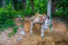马在Tayrona国家公园,哥伦比亚 免版税库存图片