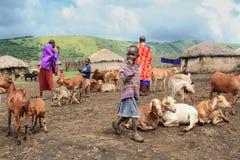 马塞人人和他们的家畜日常生活  免版税库存图片