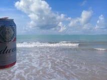 马塞约,AL,巴西- 2019年5月12日:后边百威冰镇啤酒和美丽的天空和海 免版税库存照片