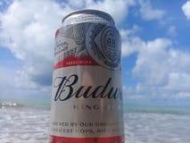 马塞约,AL,巴西- 2019年5月12日:后边百威冰镇啤酒和美丽的天空和海 免版税图库摄影
