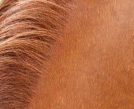 马头发 免版税库存照片