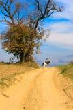 马孤独的车手 图库摄影