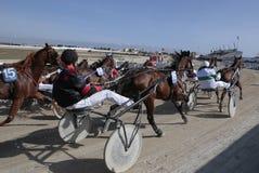 马宽上马具的赛马比赛 库存图片