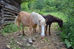 马对 免版税库存图片