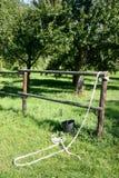 马小牧场 库存图片