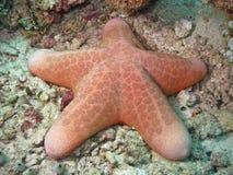 马尔代夫桃红色海星 库存图片
