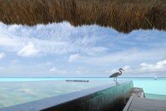 马尔代夫海景 免版税库存照片