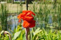 马尔代夫的动物区系,一朵美丽的花 库存照片