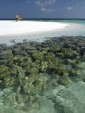 马尔代夫-愿望您在这里? 免版税库存图片